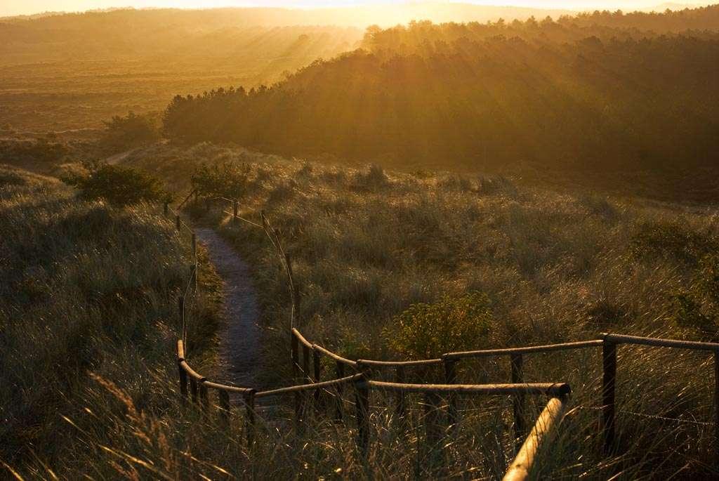 Volledig tegenlicht in de vroege ochtend. De zon komt net boven de bomen uit. Door zo min mogelijk van die zon op de foto nemen, wordt het een goed belichte foto. Een dergelijke foto heeft vaak nog wel flink wat nabewerking nodig in je beeldbewerkingsapplicatie. Nikon D80 • ISO 200 • f/125 • 1/50 @ 35mm.