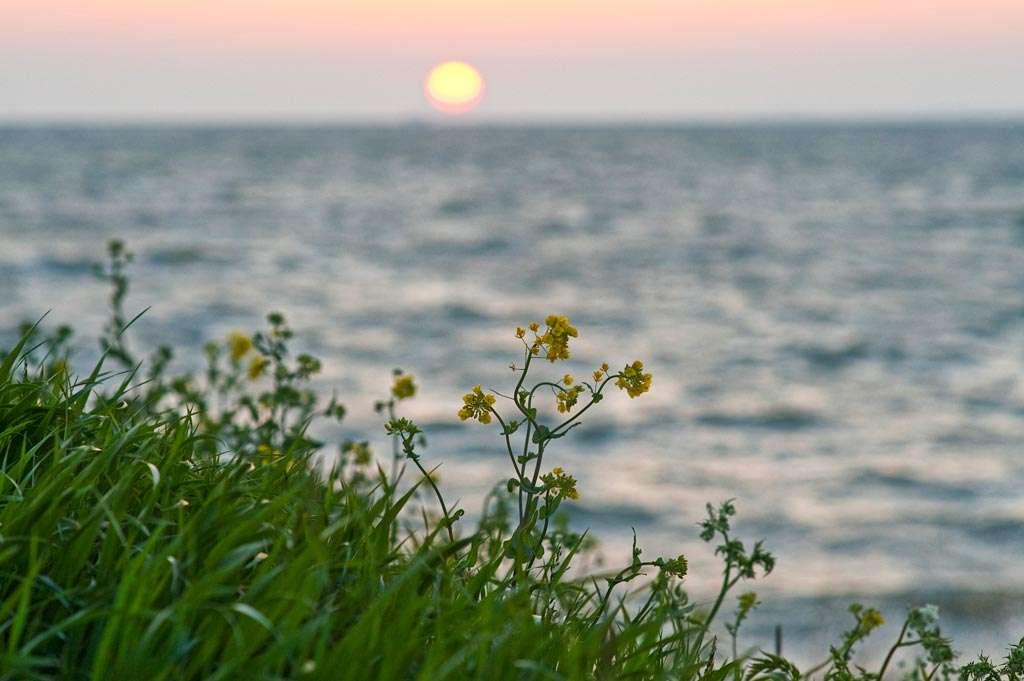 Speel met de voorgrond, de zon hoeft niet per se scherp. Nikon D700 • ISO 800 • f/5.6 • 1/320 @ 135mm.