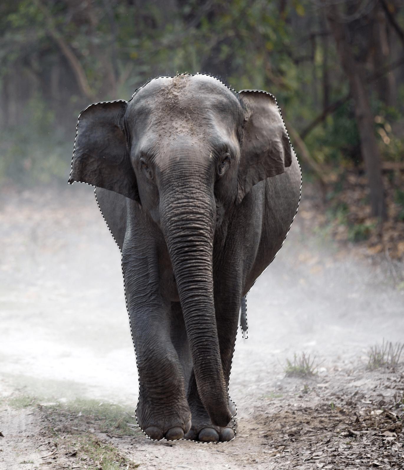 Geselecteerde olifant