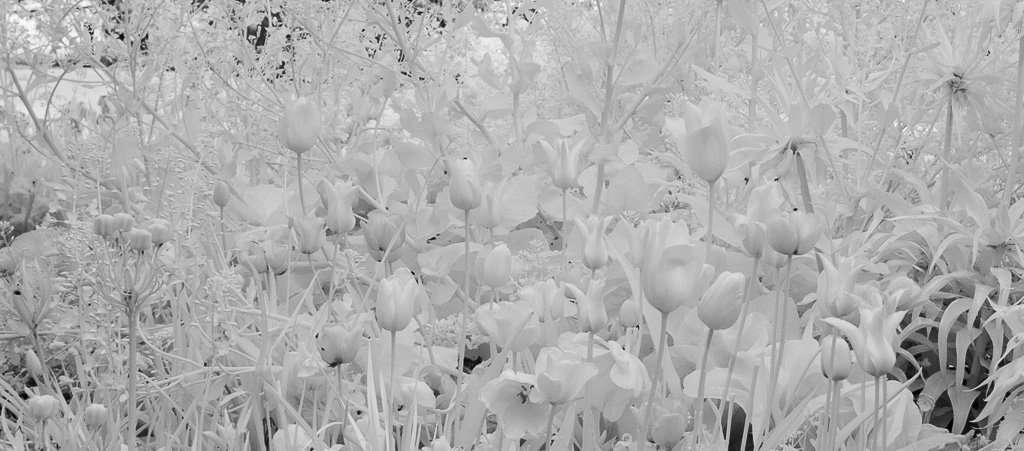 een digitale zwart-witfoto